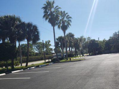 Palms And Pavement