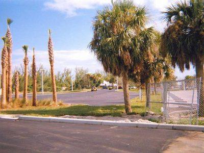 Palm Tree Parking Lot